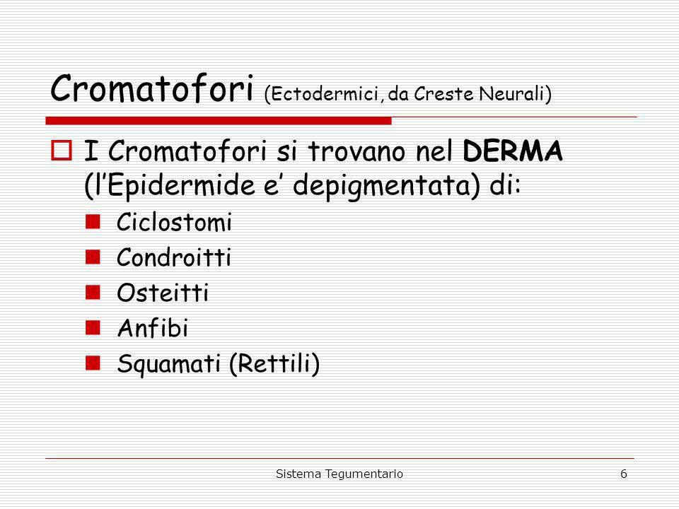 Cromatofori (Ectodermici, da Creste Neurali)