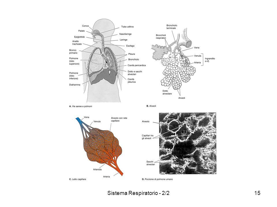 Sistema Respiratorio - 2/2