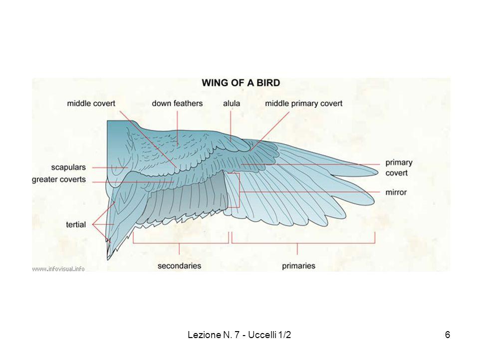 Lezione N. 7 - Uccelli 1/2