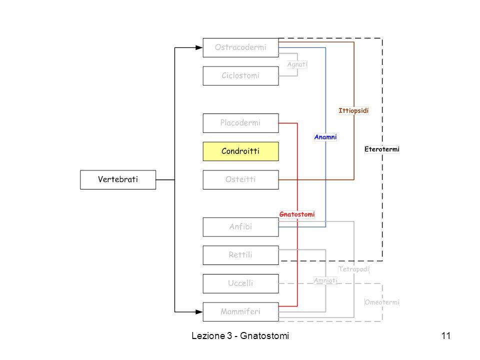 Lezione 3 - Gnatostomi