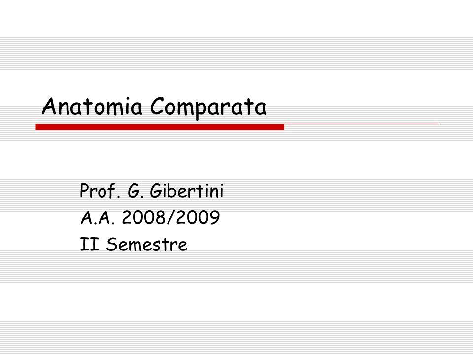 Prof. G. Gibertini A.A. 2008/2009 II Semestre