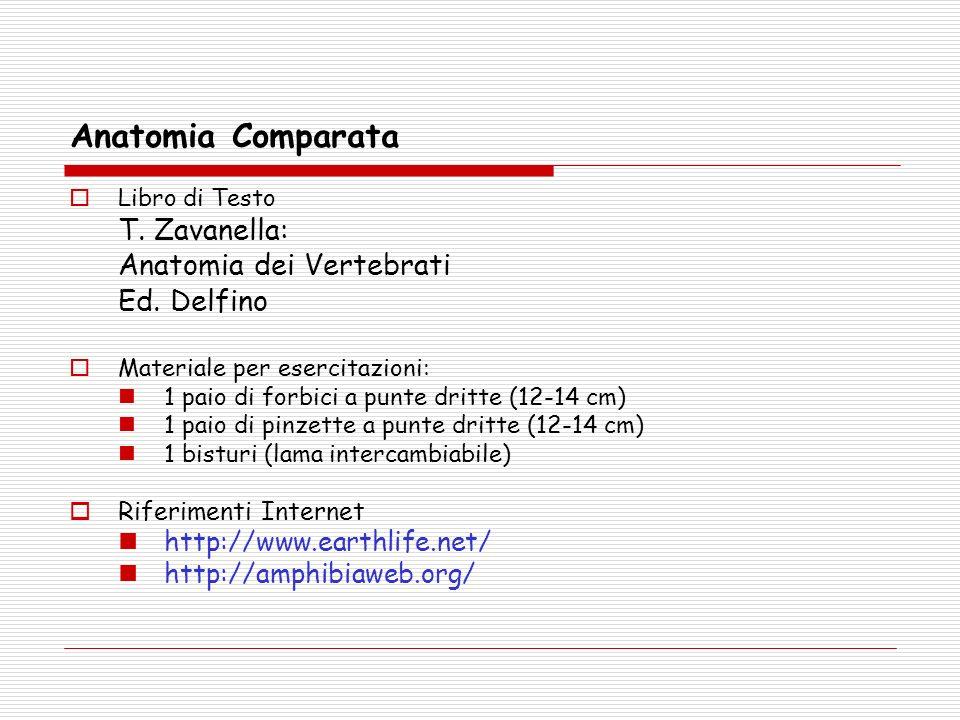 Anatomia Comparata T. Zavanella: Anatomia dei Vertebrati Ed. Delfino