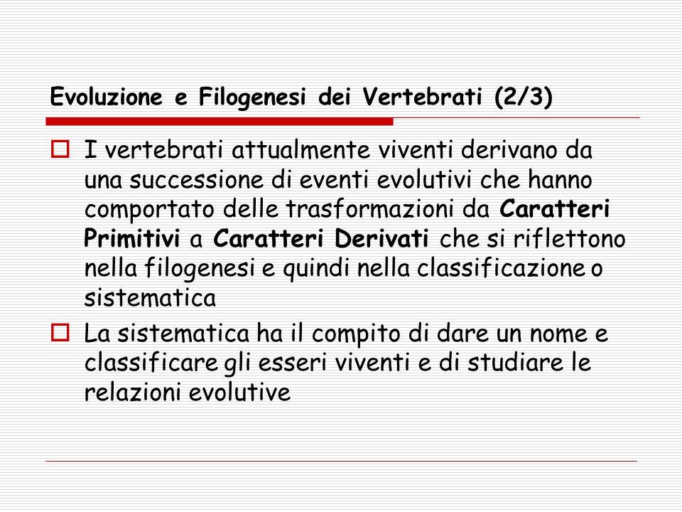 Evoluzione e Filogenesi dei Vertebrati (2/3)