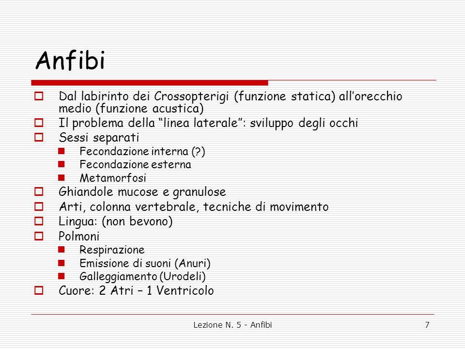 Anfibi Dal labirinto dei Crossopterigi (funzione statica) all'orecchio medio (funzione acustica)