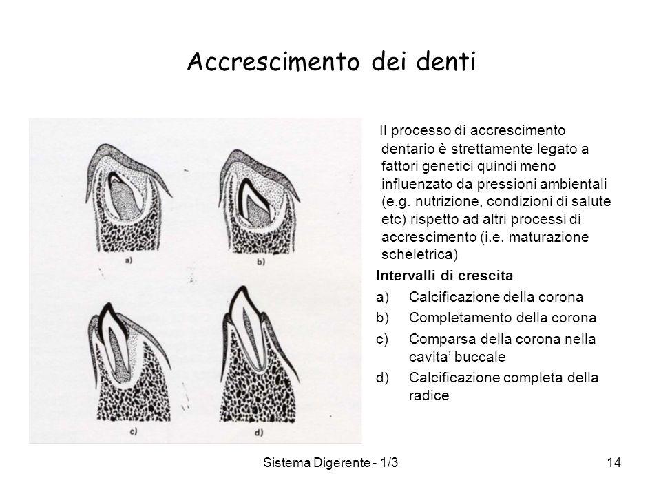 Accrescimento dei denti