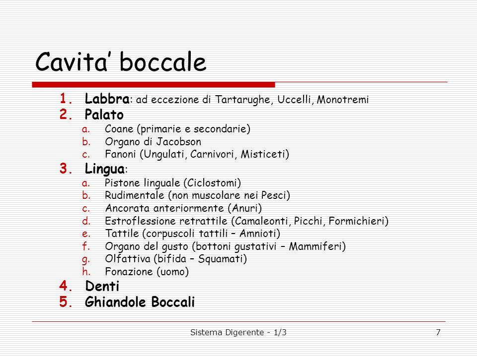 Cavita' boccale Labbra: ad eccezione di Tartarughe, Uccelli, Monotremi