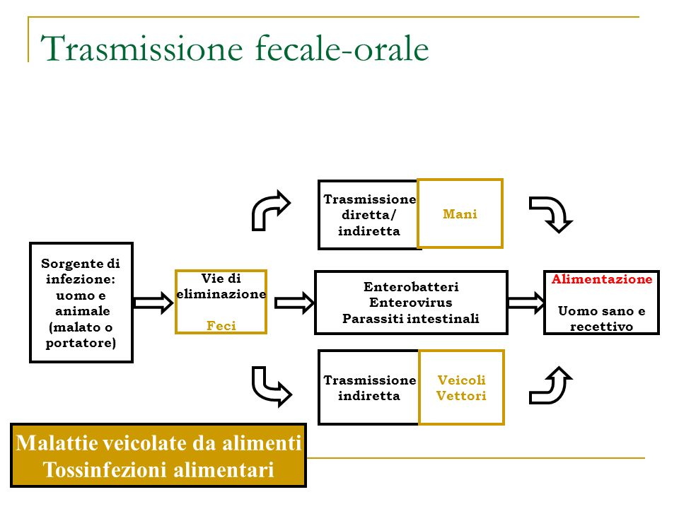Trasmissione fecale-orale