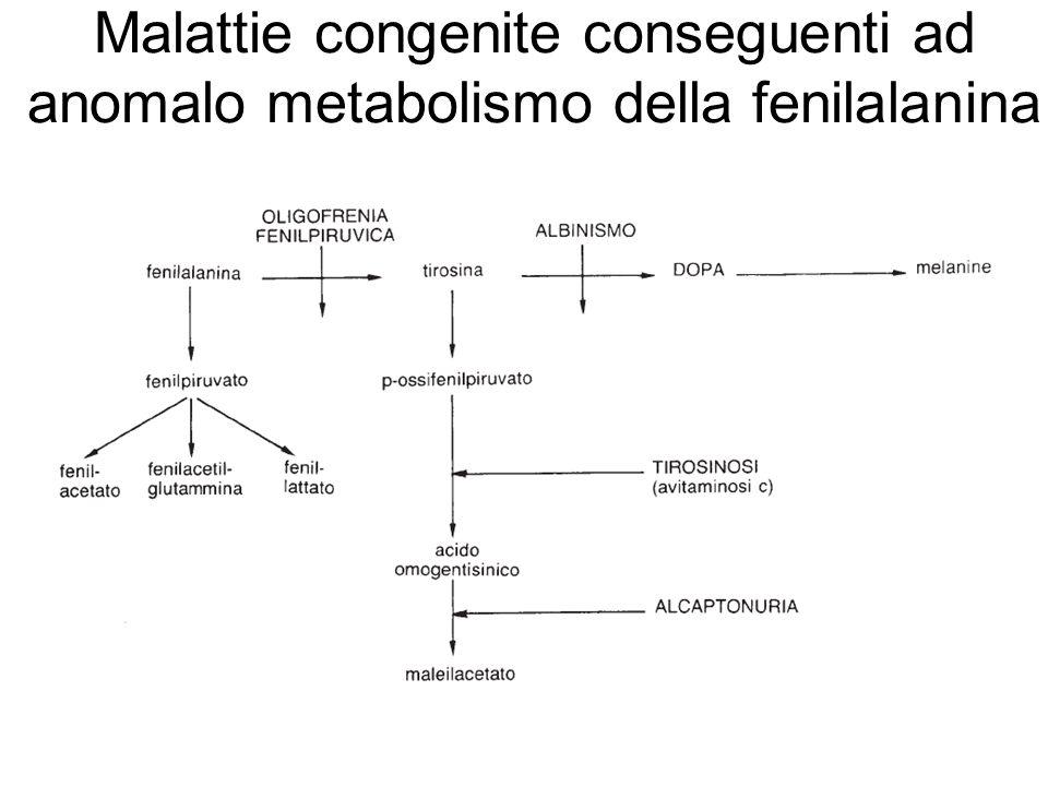 Malattie congenite conseguenti ad anomalo metabolismo della fenilalanina