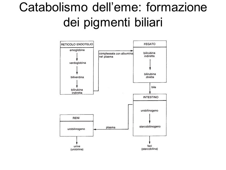 Catabolismo dell'eme: formazione dei pigmenti biliari