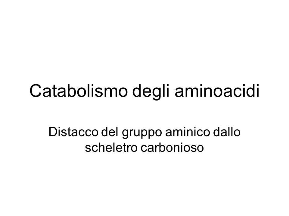 Catabolismo degli aminoacidi