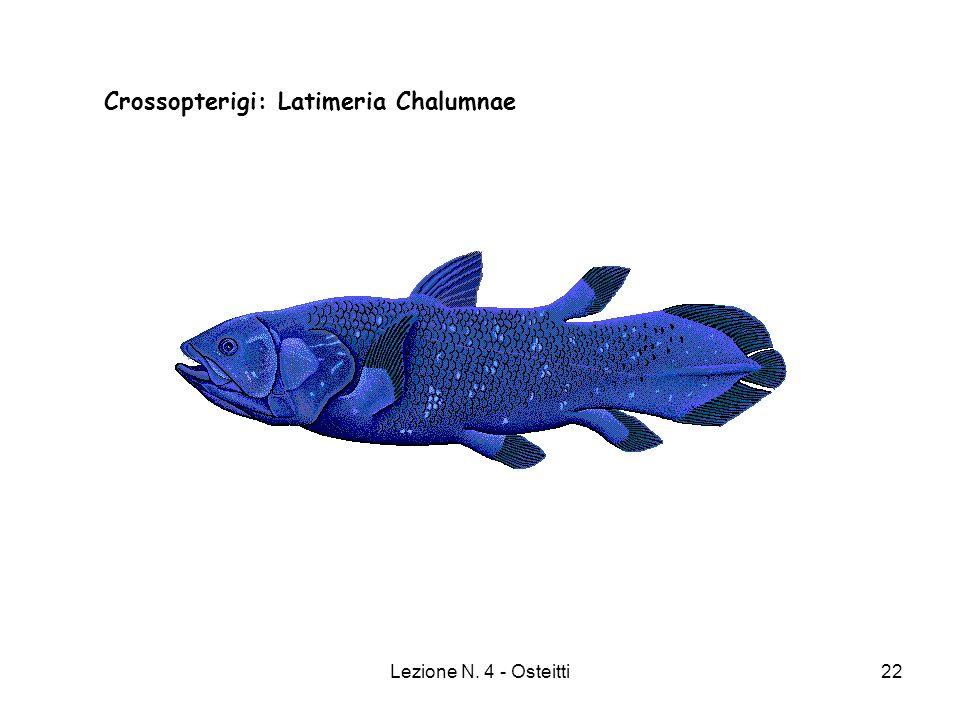 Crossopterigi: Latimeria Chalumnae