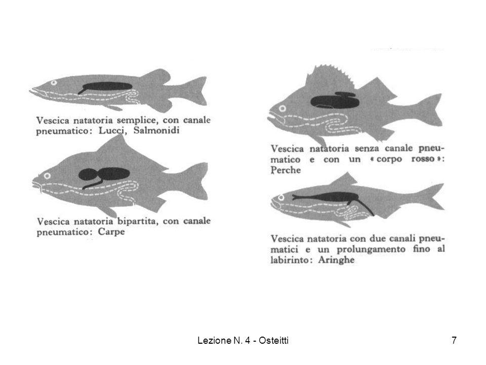 Lezione N. 4 - Osteitti