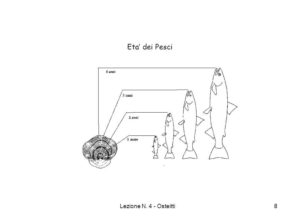 Eta' dei Pesci Lezione N. 4 - Osteitti