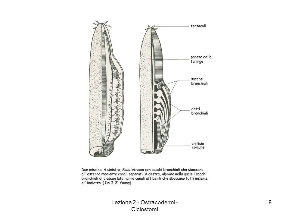 Lezione 2 - Ostracodermi - Ciclostomi