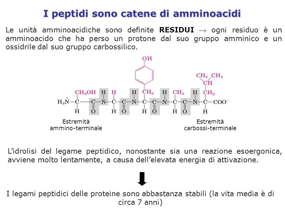I peptidi sono catene di amminoacidi