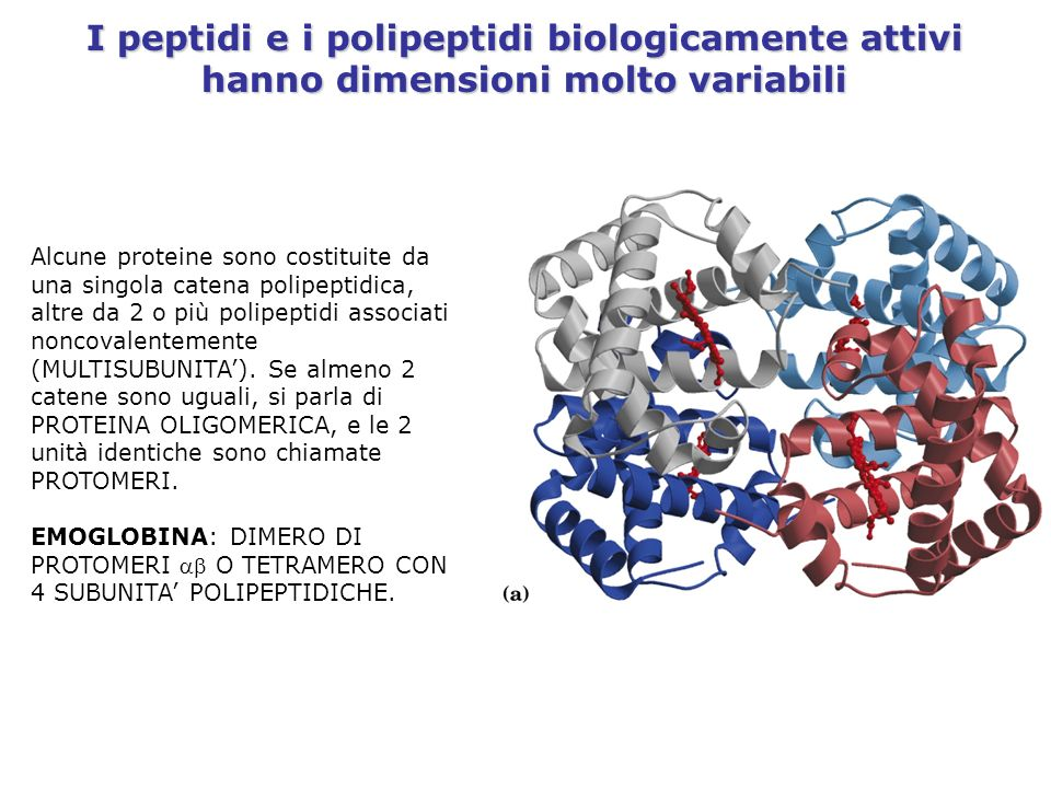 I peptidi e i polipeptidi biologicamente attivi hanno dimensioni molto variabili