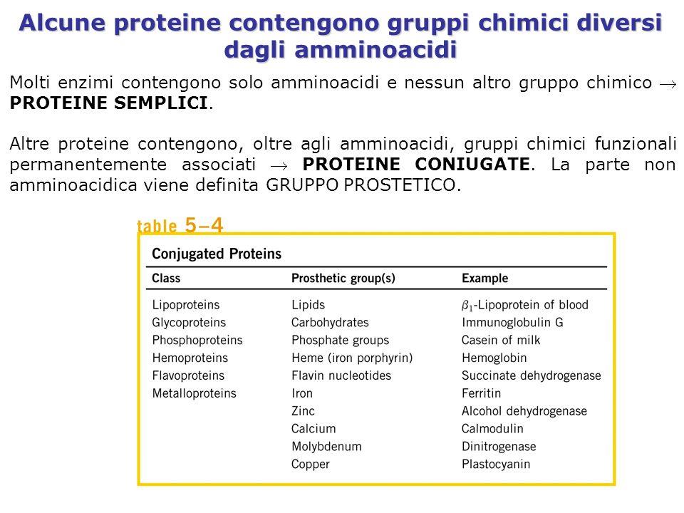 Alcune proteine contengono gruppi chimici diversi dagli amminoacidi