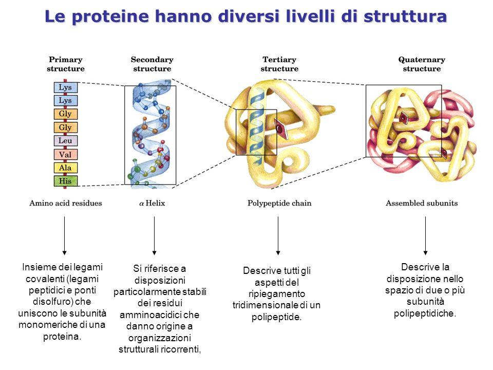 Le proteine hanno diversi livelli di struttura