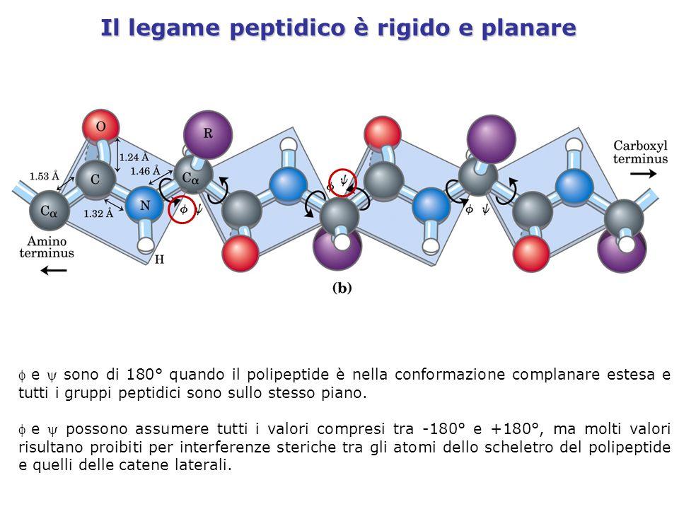 Il legame peptidico è rigido e planare