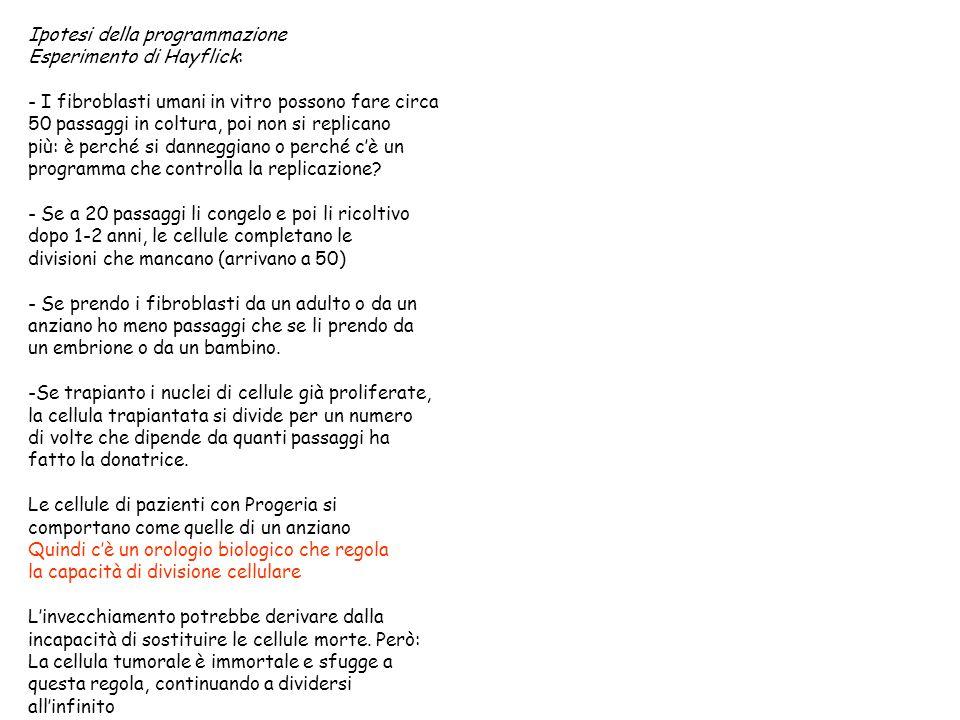 Ipotesi della programmazione