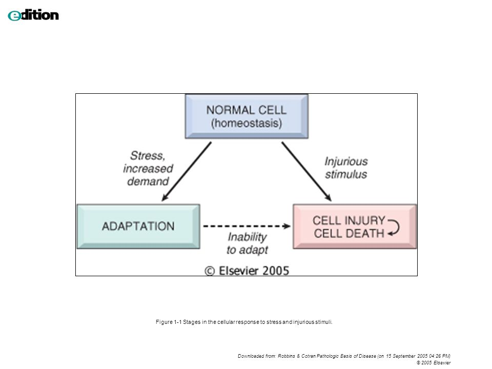 Figure 1-1 Stages in the cellular response to stress and injurious stimuli.