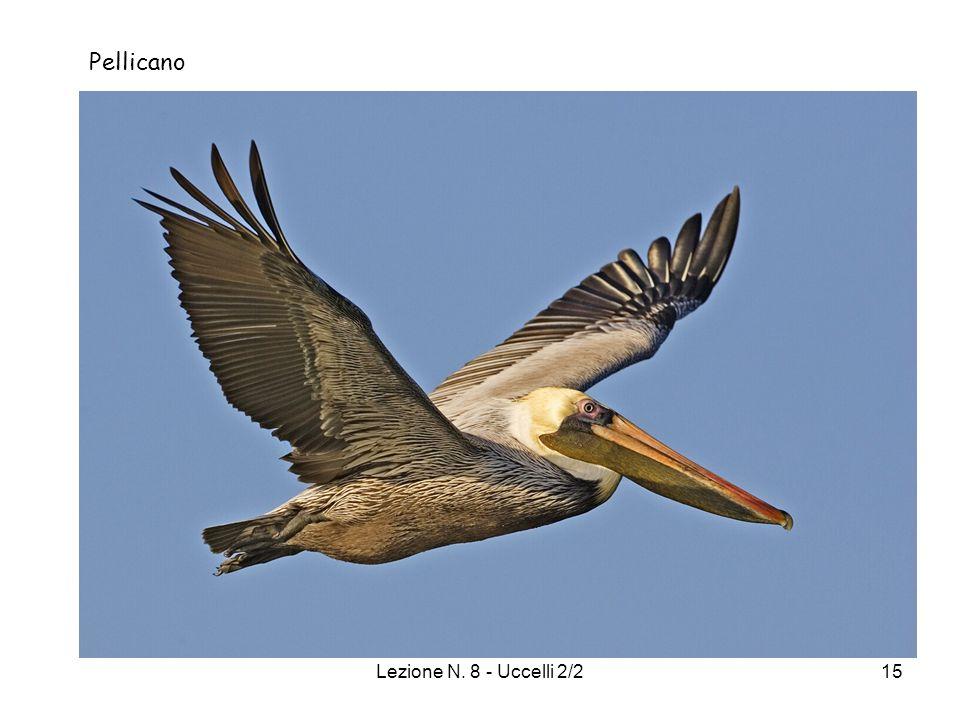 Pellicano Lezione N. 8 - Uccelli 2/2