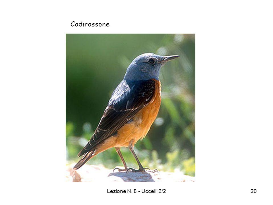 Codirossone Lezione N. 8 - Uccelli 2/2