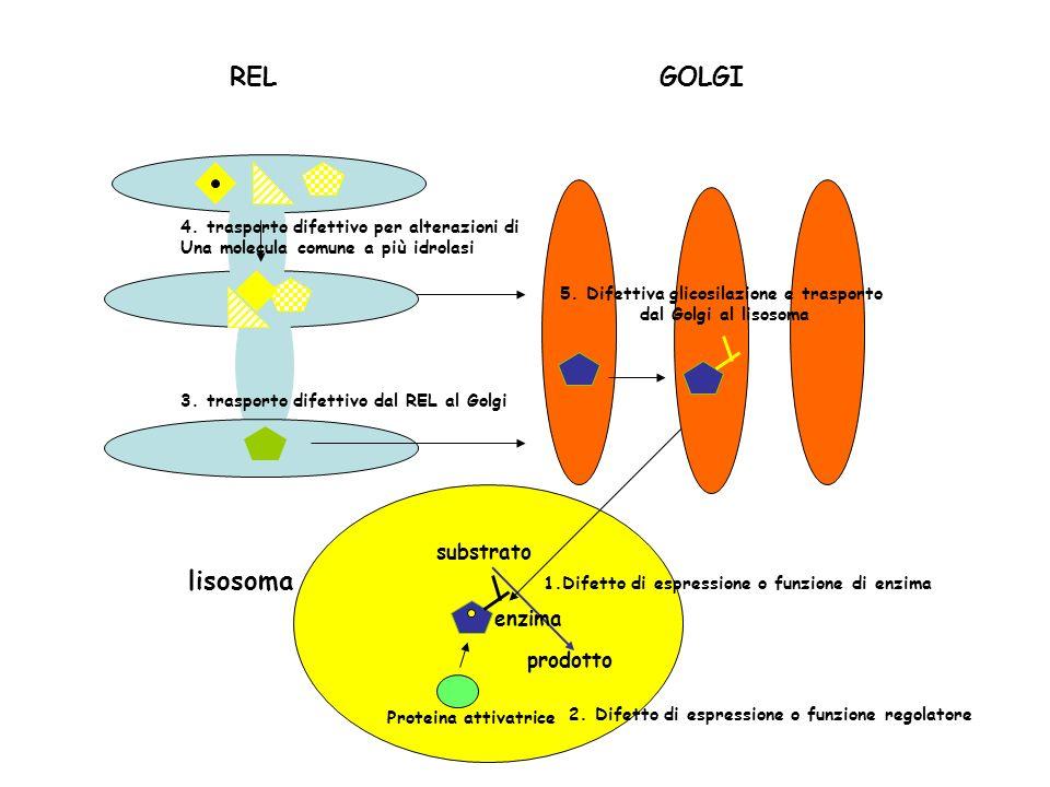 5. Difettiva glicosilazione e trasporto