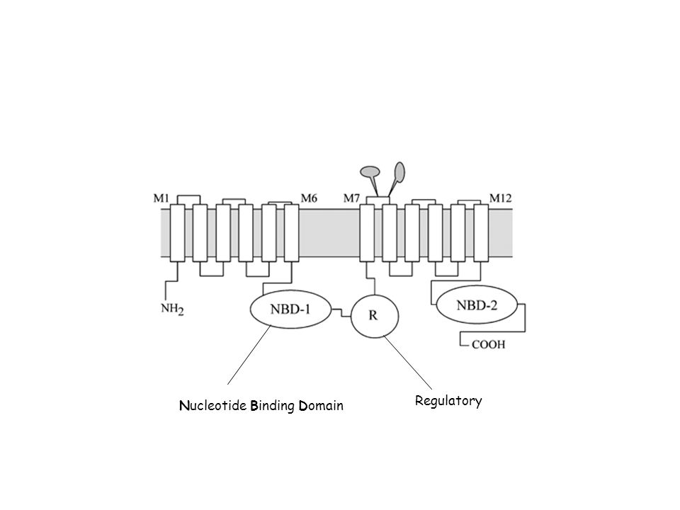 Regulatory Nucleotide Binding Domain