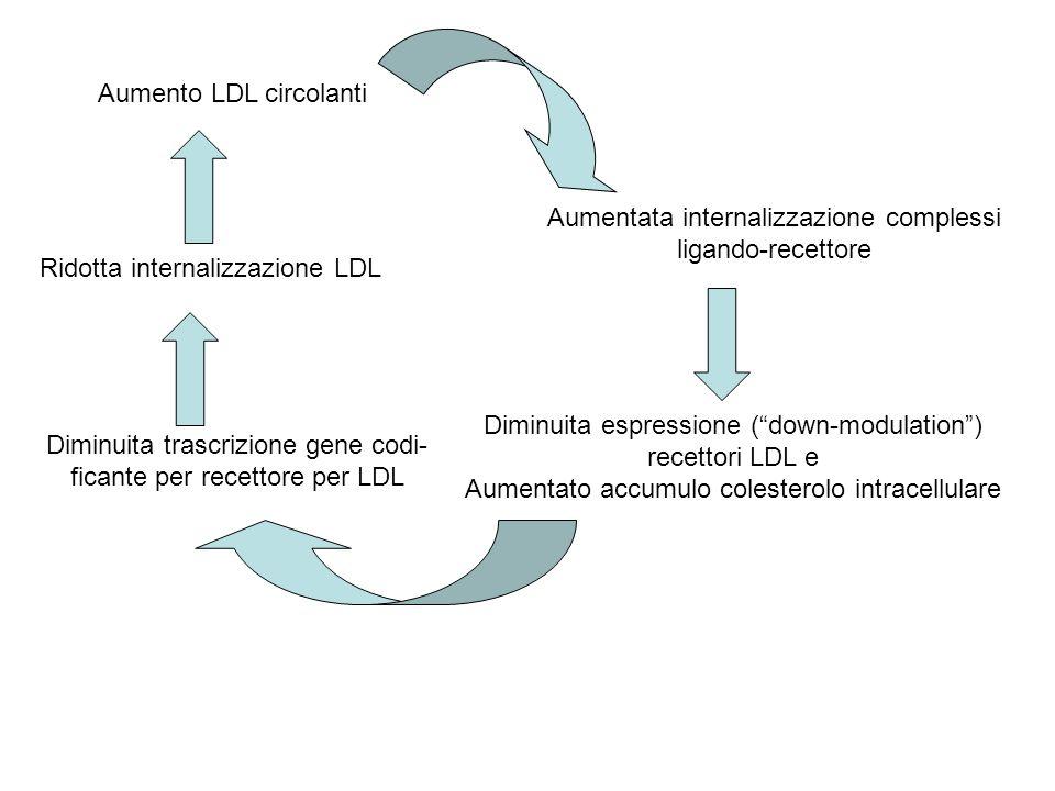 Aumento LDL circolanti