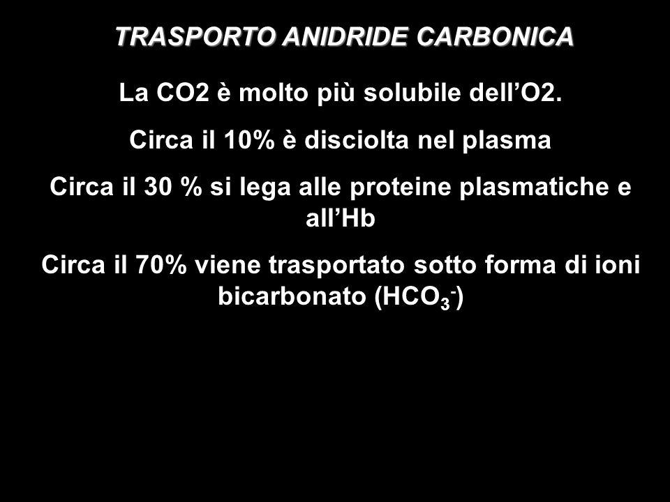 TRASPORTO ANIDRIDE CARBONICA