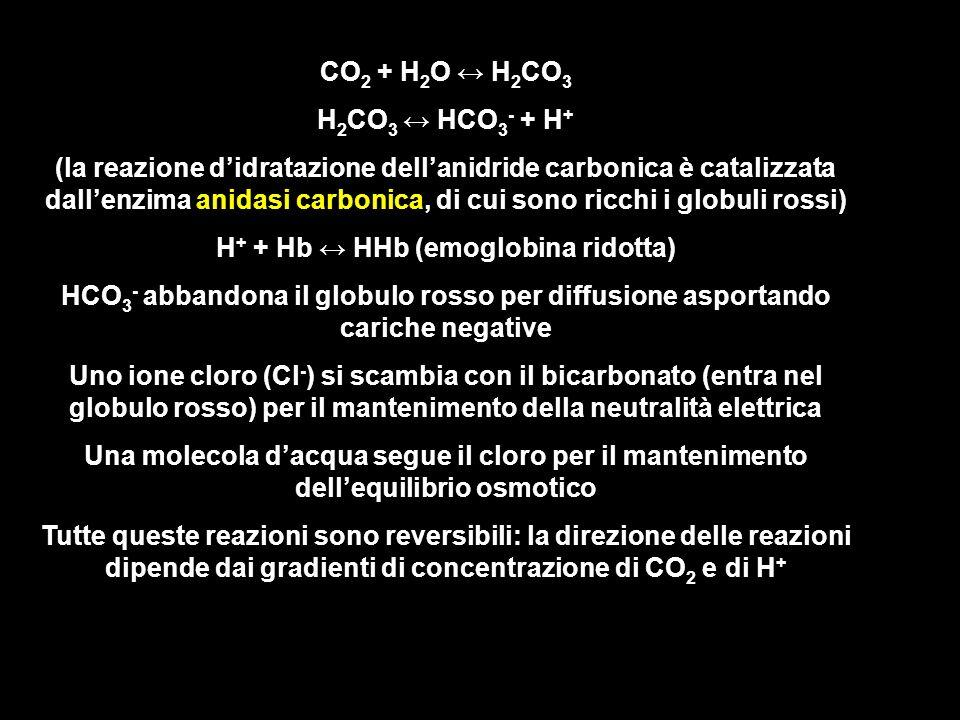 H+ + Hb ↔ HHb (emoglobina ridotta)