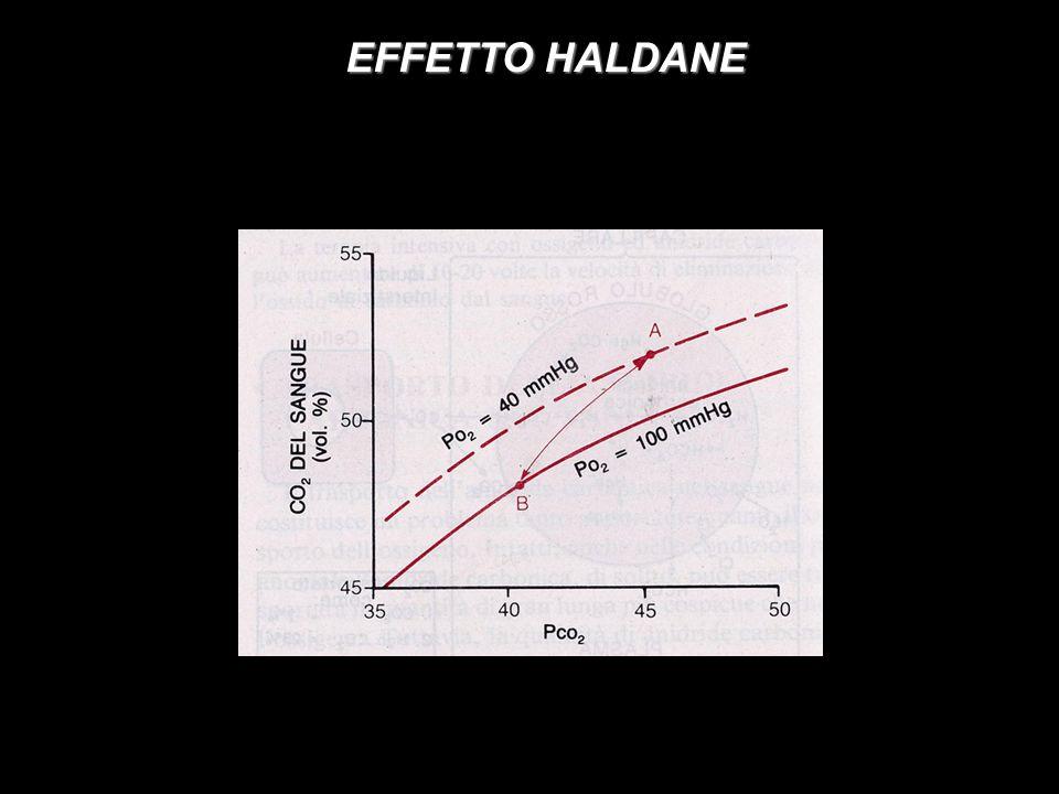 EFFETTO HALDANE