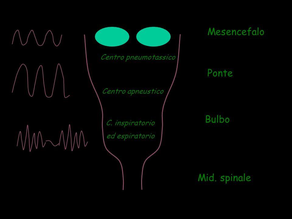 Mesencefalo Ponte Bulbo Mid. spinale Centro pneumotassico