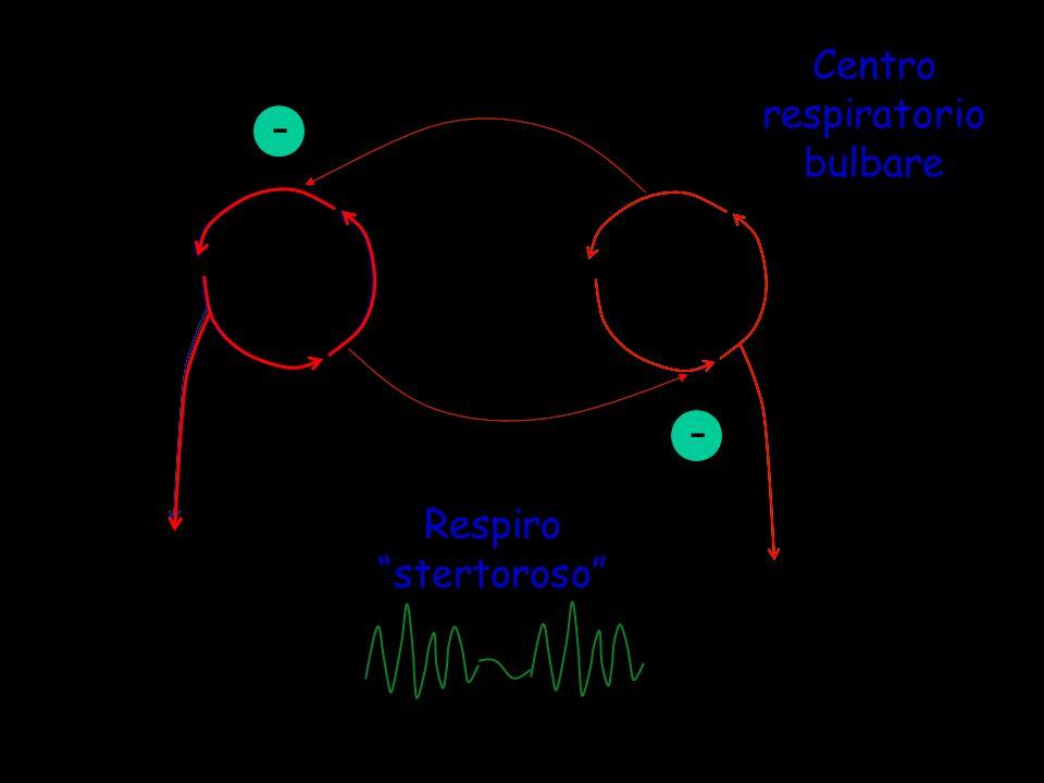 Centro respiratorio bulbare