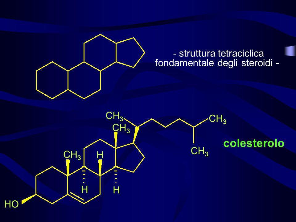 - struttura tetraciclica fondamentale degli steroidi -