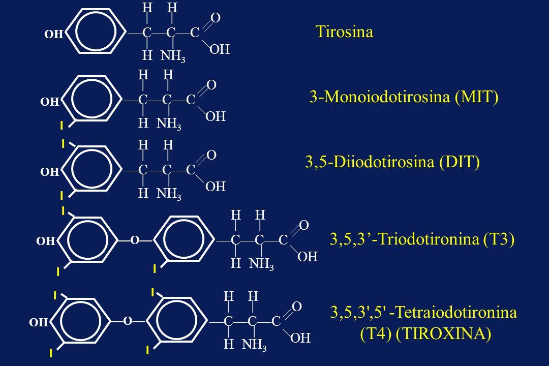 3-Monoiodotirosina (MIT)