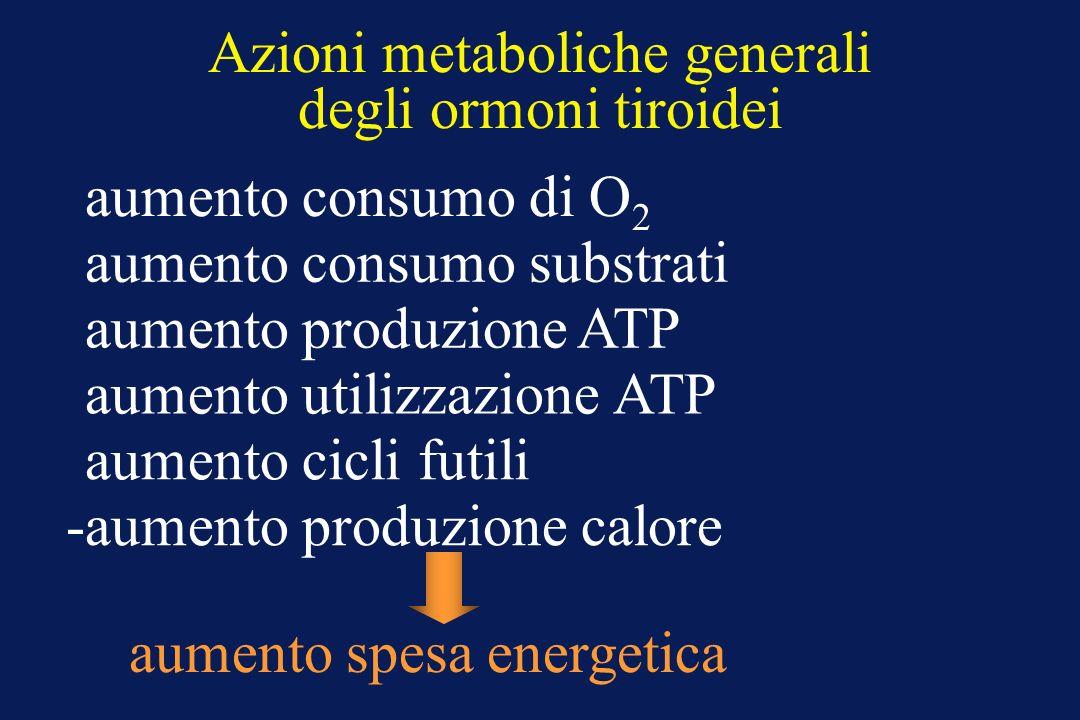 Azioni metaboliche generali degli ormoni tiroidei