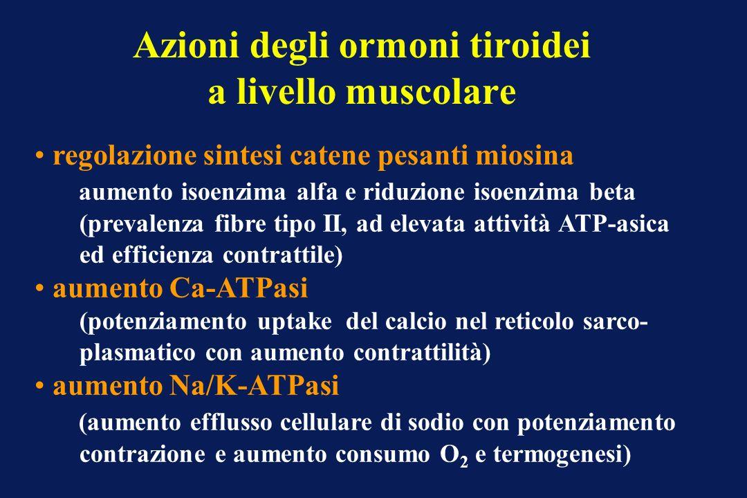 Azioni degli ormoni tiroidei a livello muscolare
