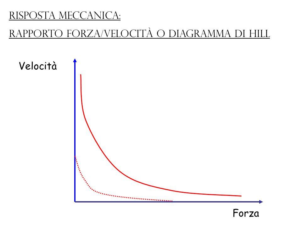 Risposta meccanica: rapporto forza/velocità o Diagramma di Hill Velocità Forza