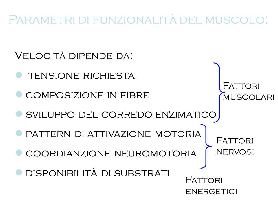Parametri di funzionalità del muscolo: