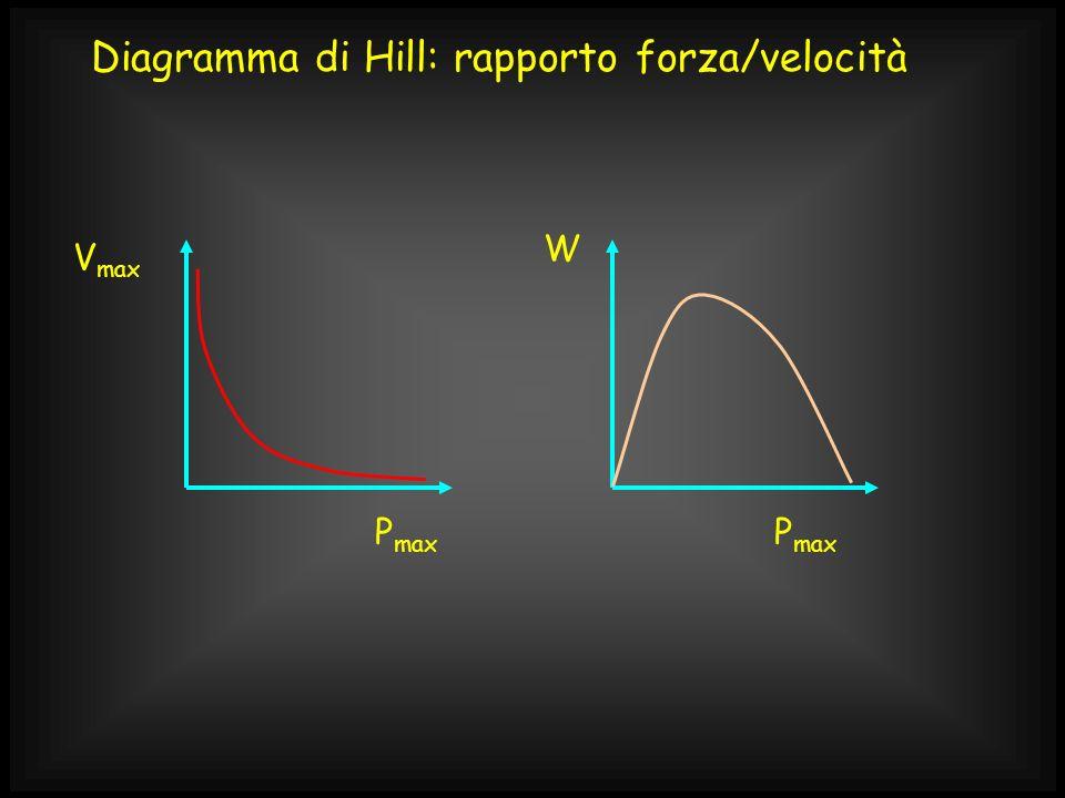Diagramma di Hill: rapporto forza/velocità