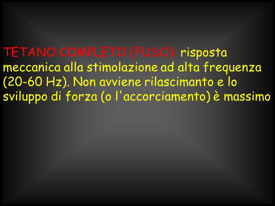 TETANO COMPLETO (FUSO): risposta meccanica alla stimolazione ad alta frequenza (20-60 Hz).