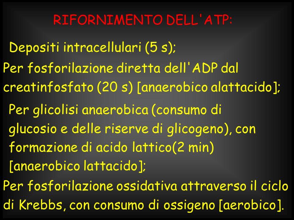 RIFORNIMENTO DELL ATP: