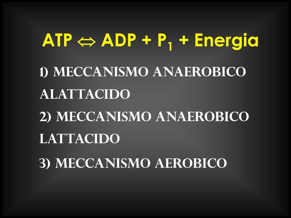 ATP  ADP + P1 + Energia 1) meccanismo anaerobico alattacido