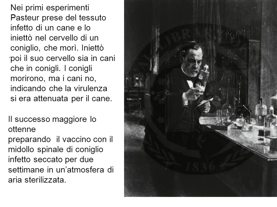 Nei primi esperimenti Pasteur prese del tessuto infetto di un cane e lo iniettò nel cervello di un coniglio, che morì. Iniettò poi il suo cervello sia in cani che in conigli. I conigli morirono, ma i cani no, indicando che la virulenza si era attenuata per il cane.