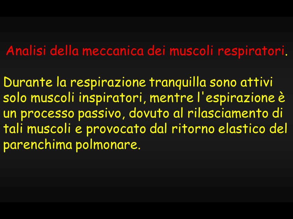 Analisi della meccanica dei muscoli respiratori.