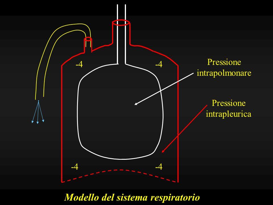 Modello del sistema respiratorio