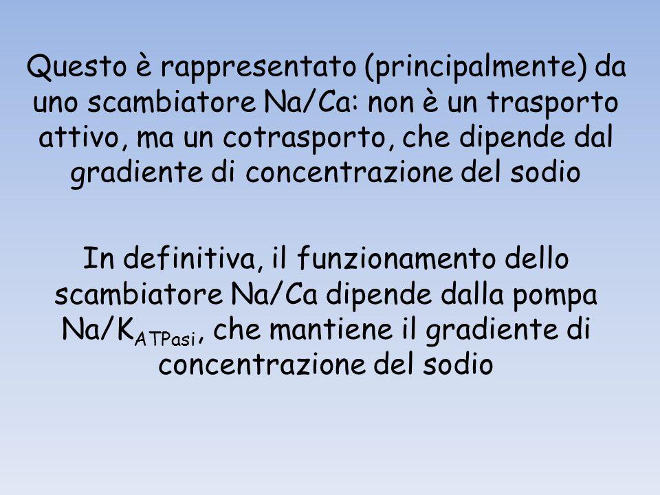 Questo è rappresentato (principalmente) da uno scambiatore Na/Ca: non è un trasporto attivo, ma un cotrasporto, che dipende dal gradiente di concentrazione del sodio
