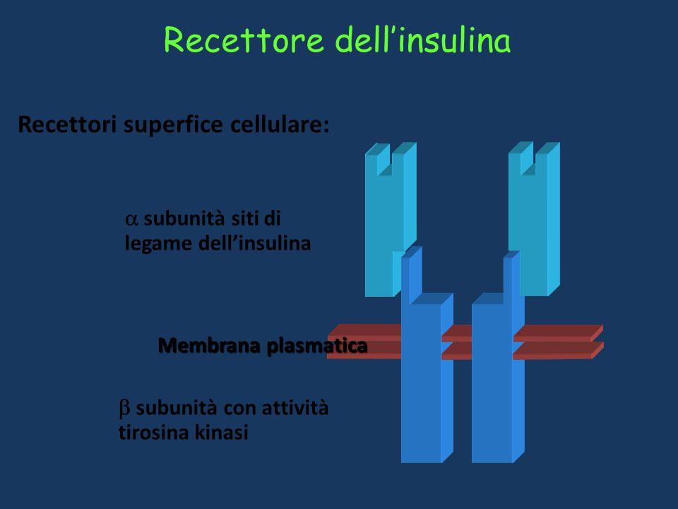 Recettore dell'insulina